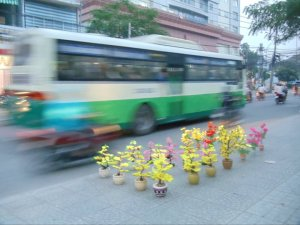 The symbol of Tet, yellow flowers, for sale on the side of a busy road.